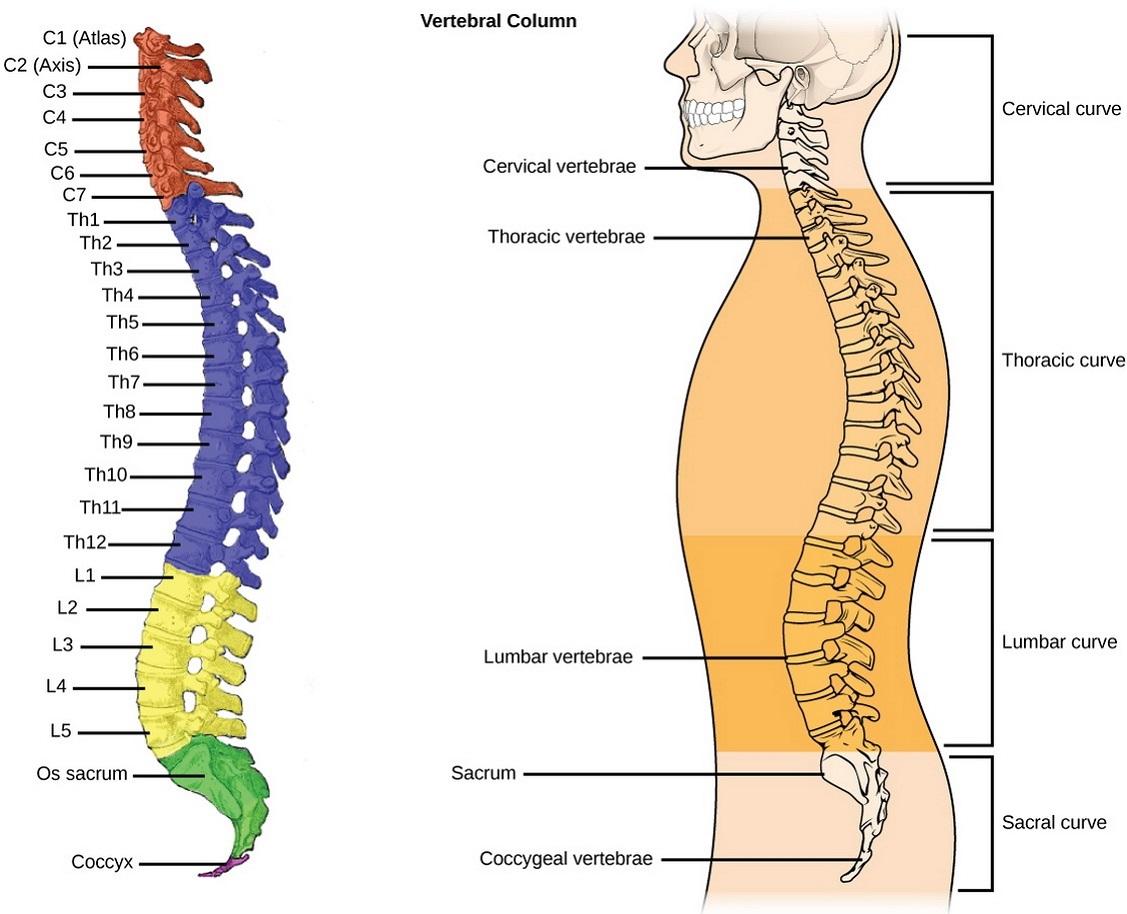 Vertebral column pain
