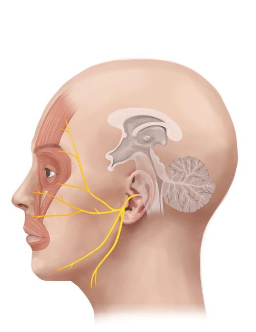 درمان دردهای صورت