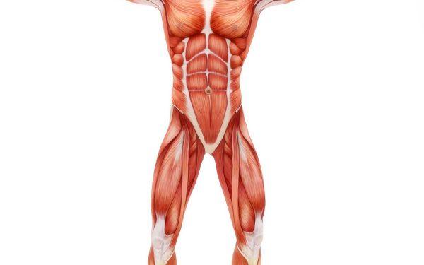 بیومکانیک بدن انسان