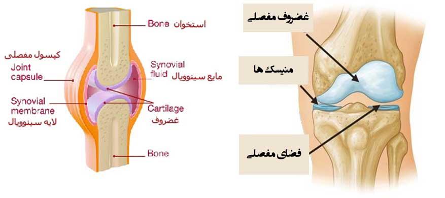 قسمت های تشکیل دهنده مفصل