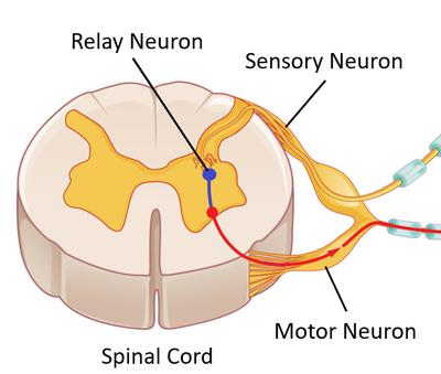 اجزا تست عصب عضله